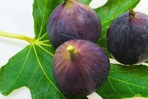 Fig, Medlar, Quince, Kiwi