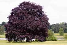 All Garden Trees