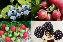 All Soft Fruit