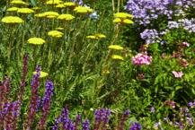 All Herbaceous Plants