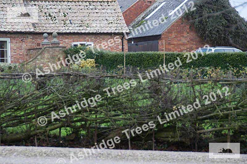 country hedging