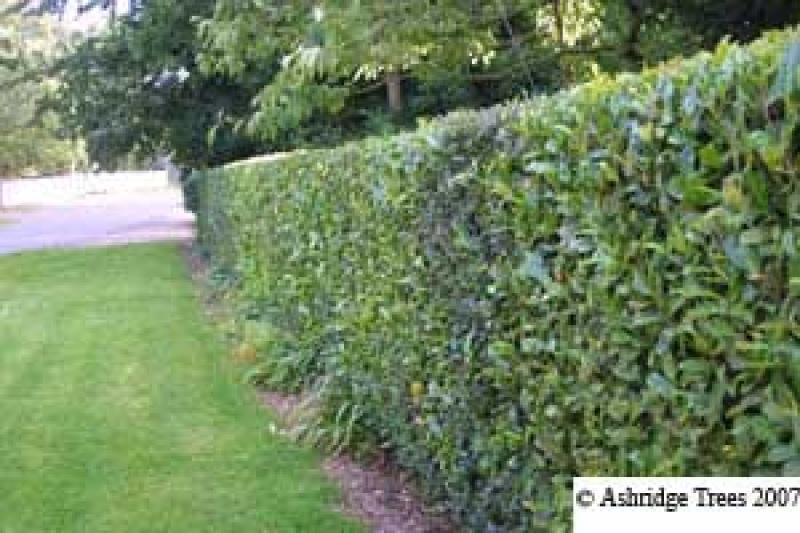 Barrier Hedging Amp Screening Plants