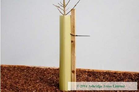 Ashridge Trees Guard. 60cm and 120cms. Stake not included