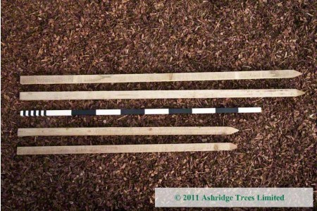 Stakes for tree guards and maiden fruit trees