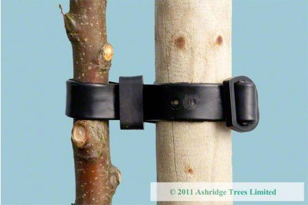 Stout Tree Stake for standards and fruit trees (tie not included)
