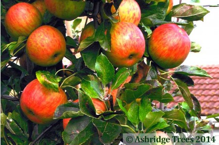 Apple Trees - Bright Future