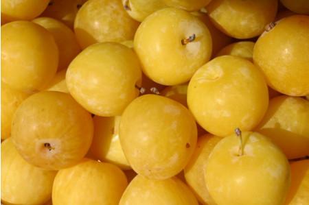 Plum Trees - Coes Golden Drop
