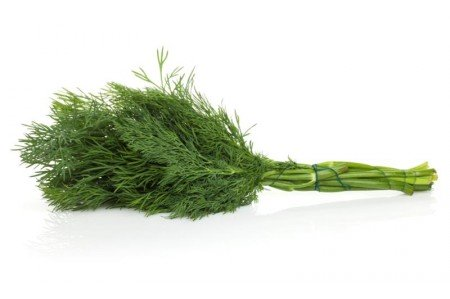 Dill Weed Leaves