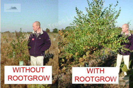 Rootgrow bareroot tree trial
