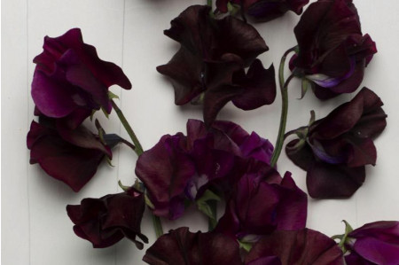 Windsor Sweet peas