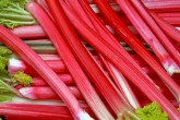 Freshly cut StockBridge Arrow rhubarb