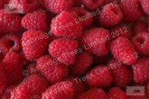 Tadmor Raspberries