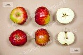 Tom Putt Apples