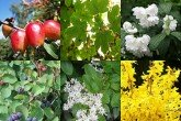 All Seasons Hedge Mix - 50 Pack