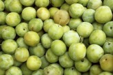 Gage Trees - Old Greengage