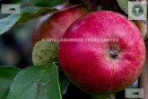 Scrumptious Apple in September