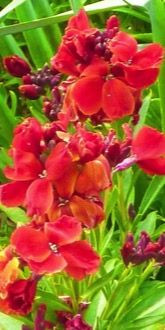 Ruby Gem Wallflowers