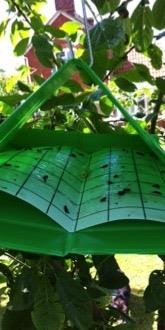 Pheromone Trap - Codling Moths