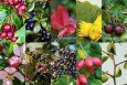 Elspeth Thompsons Edible Hedge Mix - 50 Pack