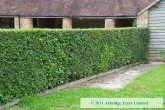 Native Conservation Hedge Mix - 50 Pack