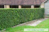 Mixed Hedging