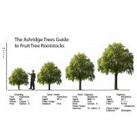 Apple & Pear Tree Rootstocks