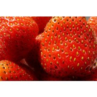 Fragaria x ananassa Christine fruit close up