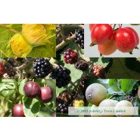Edible Hedging Pack of 50 plants