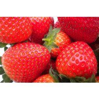 Fenella Strawberries