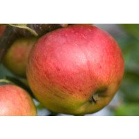 Jupiter Apple