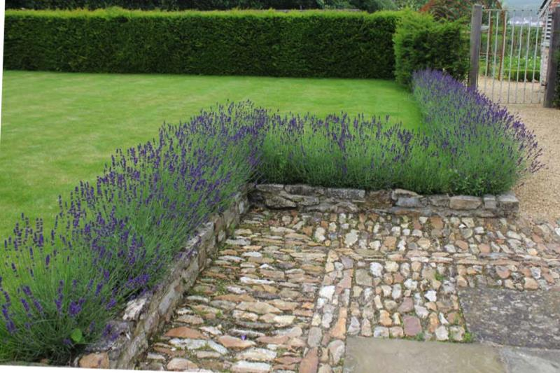 Preparing A Lavender Bed Advice From Ashridge Nurseries