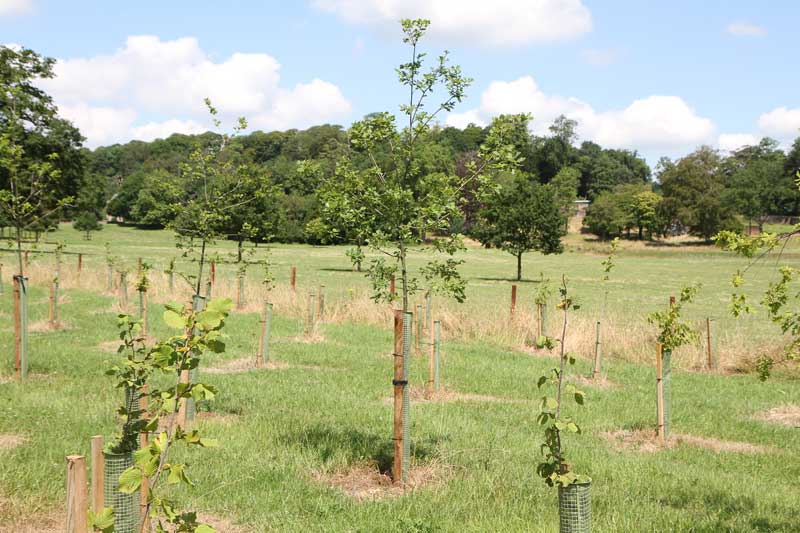 How To Plant Bareroot Trees