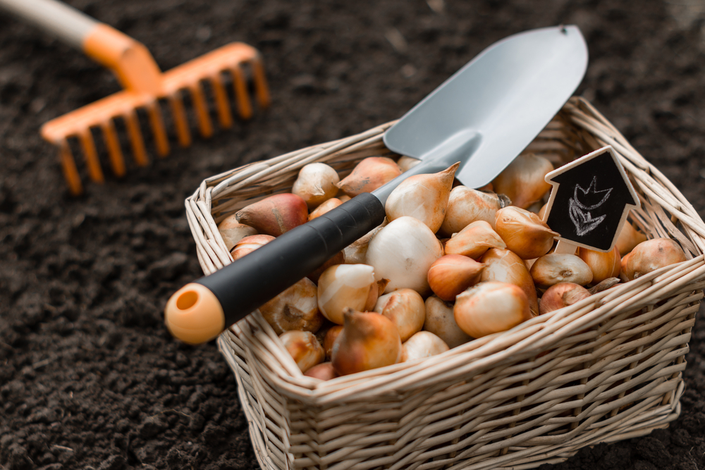 how to store garden bulbs