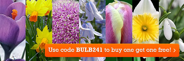 Buy one get one free on all spring bulbs