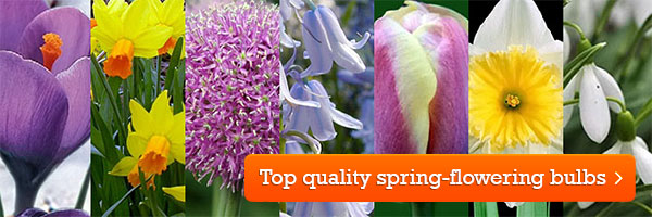 Top quality spring-flowering bulbs from Ashridge Nurseries