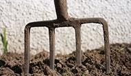 Gardening jobs for February