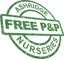 FREE delivery from Ashridge Nurseries