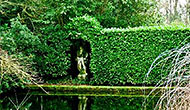 Laurel hedging can create stunning structures