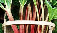 Recipe: Rhubarb chutney