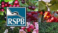 RSPB bird-friendly hedging