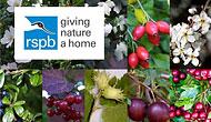 RSPB and Ashridge Nurseries join forces