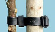 Buckle up your young trees - and grease your fruit trees too