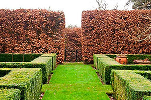 Beech and box hedging