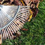 Topical Tip: Raking leaves for good garden hygiene