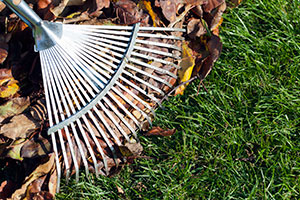 Raking leaves equals good garden hygiene