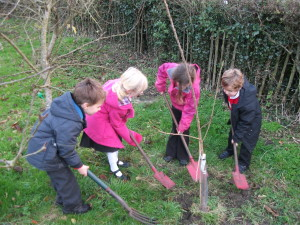 Update on our 'Plant a tree, make air for free' schools project!