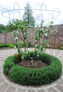 Rose Pruning Courses - Gardens of the Rose