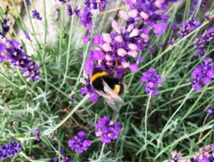 My top 8 plants to attract bees and other pollinators