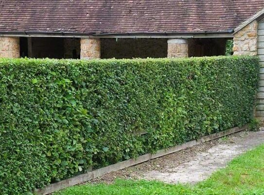 hedging for sale