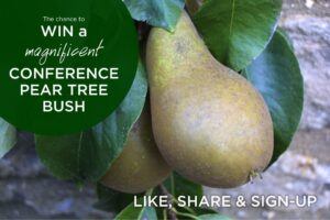 Win a free pear tree